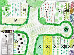 planung im gemüsegarten fruchtfolge mischkultur - erstes jahr, Garten Ideen