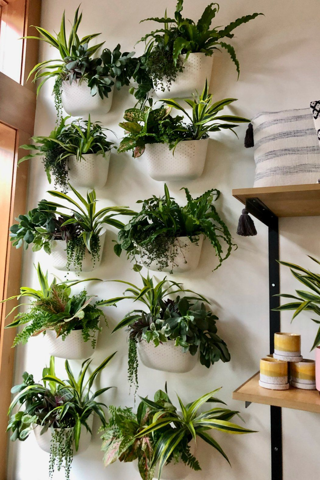 Wally Eco Wall Planter - White