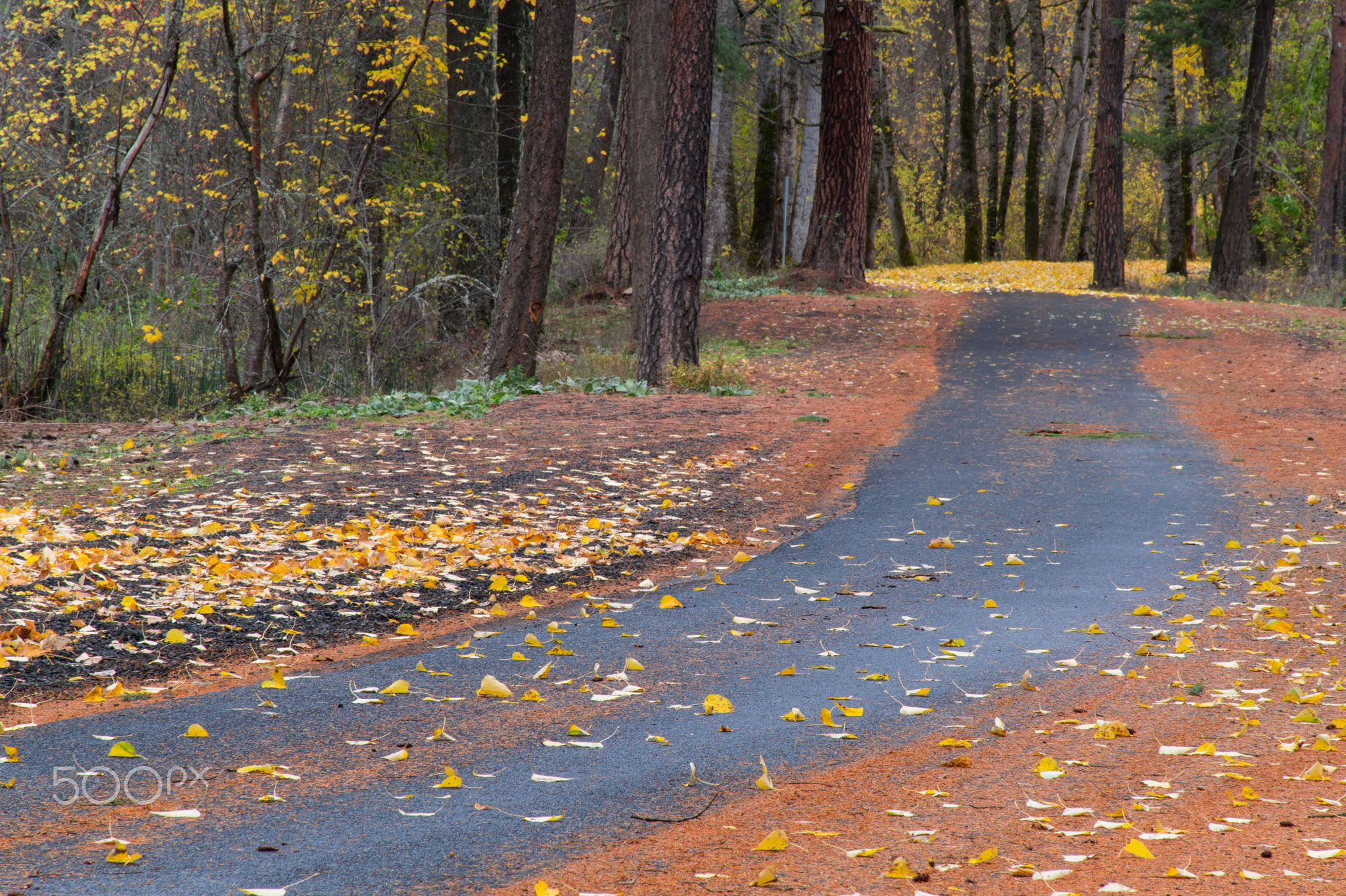Path in Fall Foilage - On the path around Harris Park near Milton-Freewater, OR, in fall, in the Blue Mountain foothills.