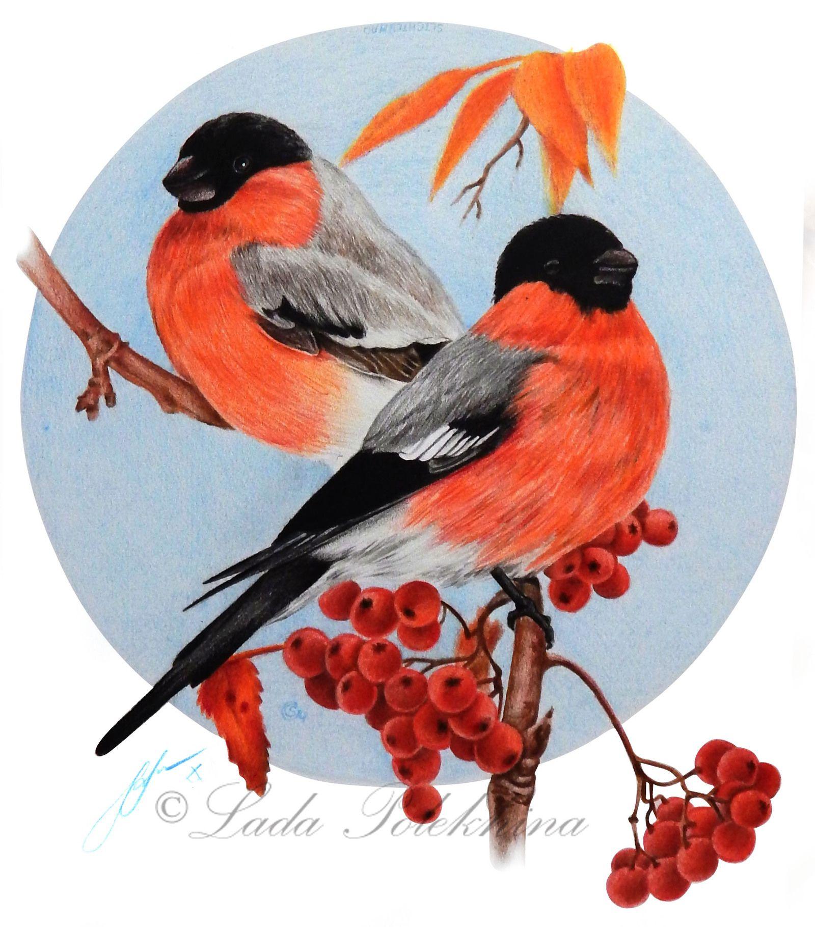Картинки яжмать, снегирь открытка для детей