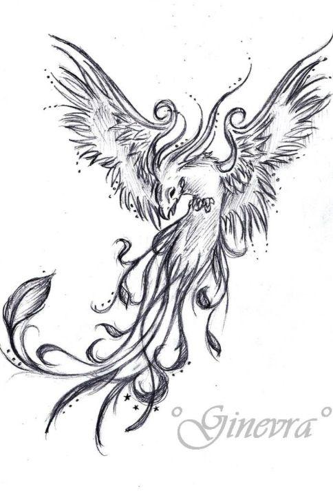 Tattoo sketch  phoenix  be898b351f9b