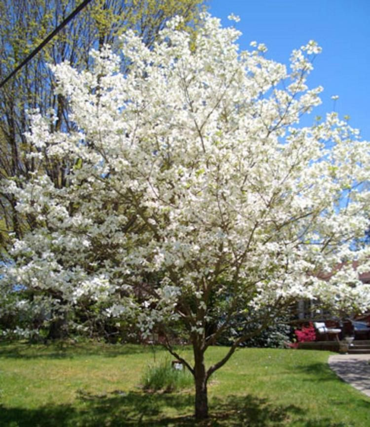 Backyard Plant And Trees Types Driveway Landscaping Backyard Plants Flowering Trees