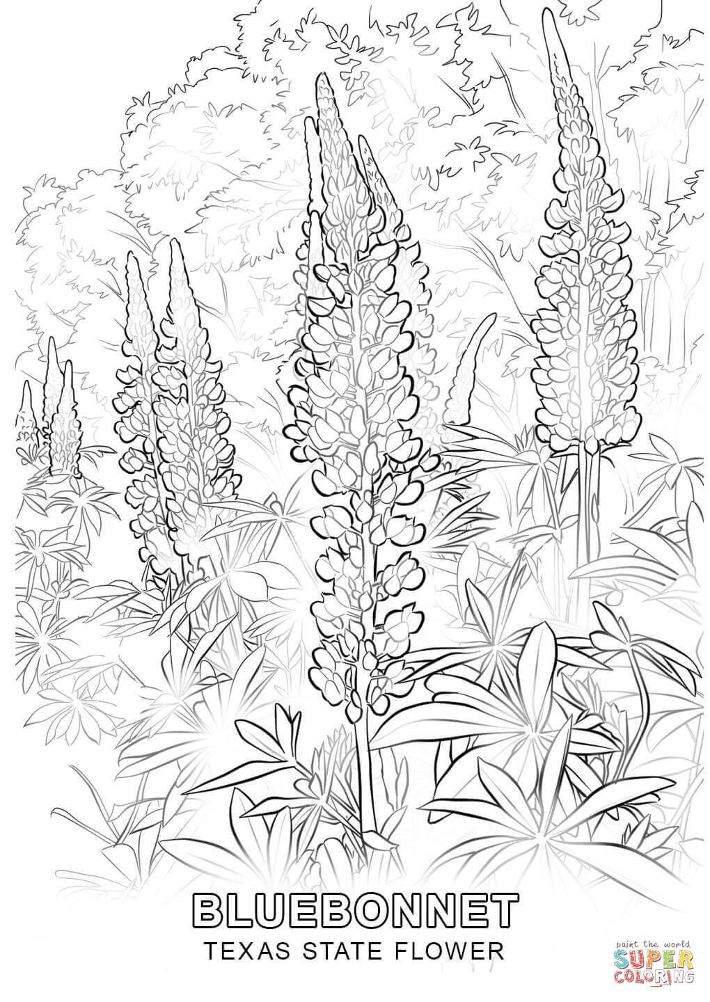 Brilliant Picture Of Texas Coloring Pages Flower Coloring Pages