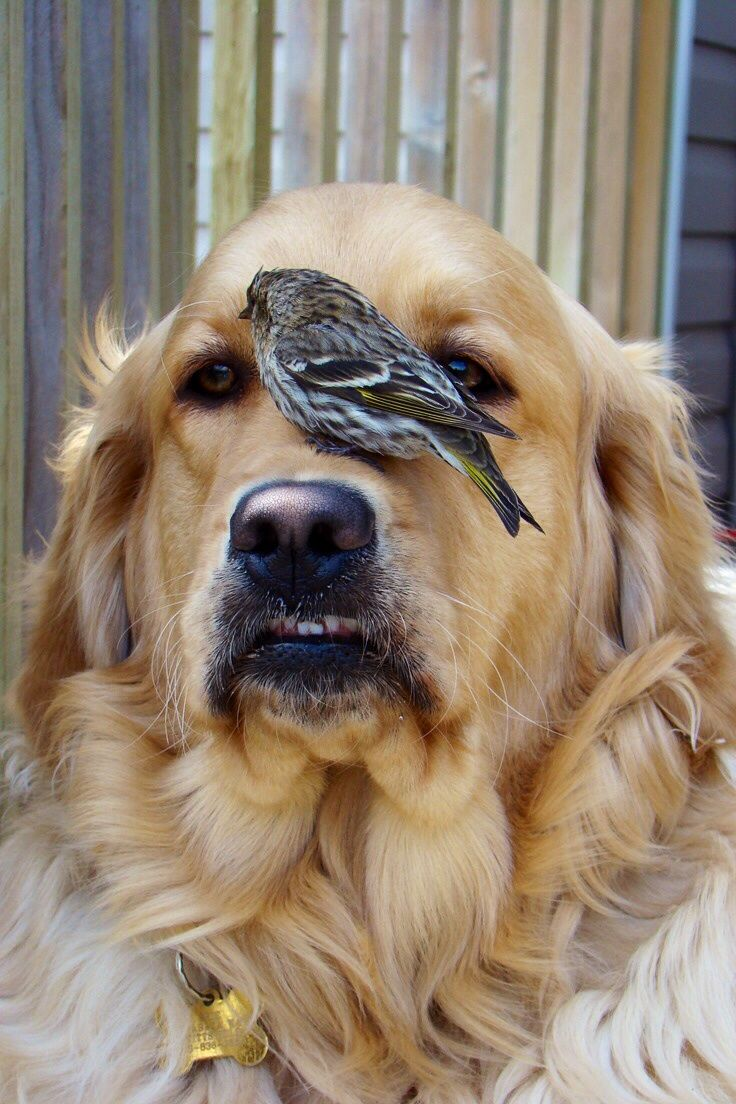 Baby Finch on dog's nose!