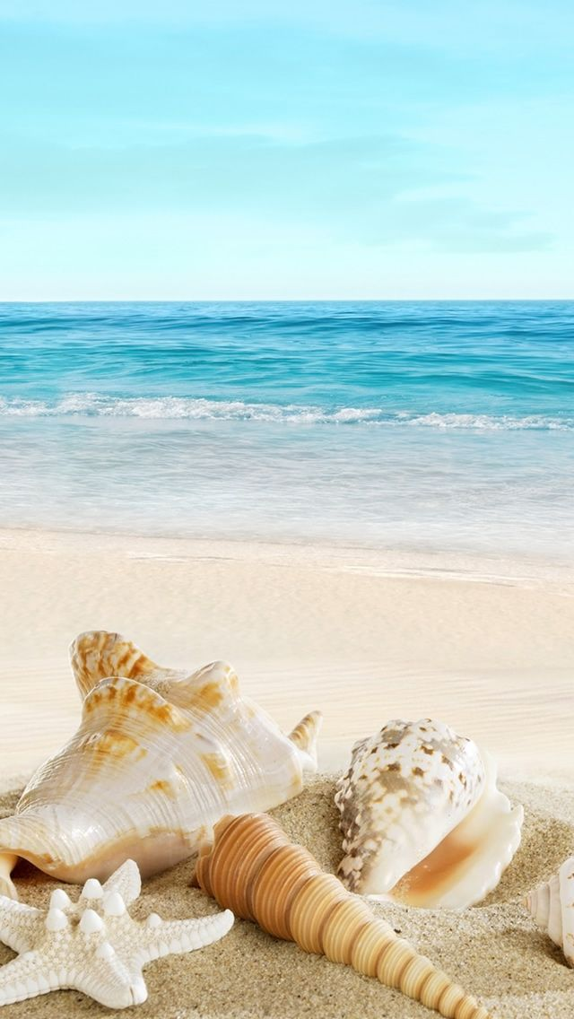 Nature Sunny Ocean Seaside Beach Shells iPhone 5s wallpaper