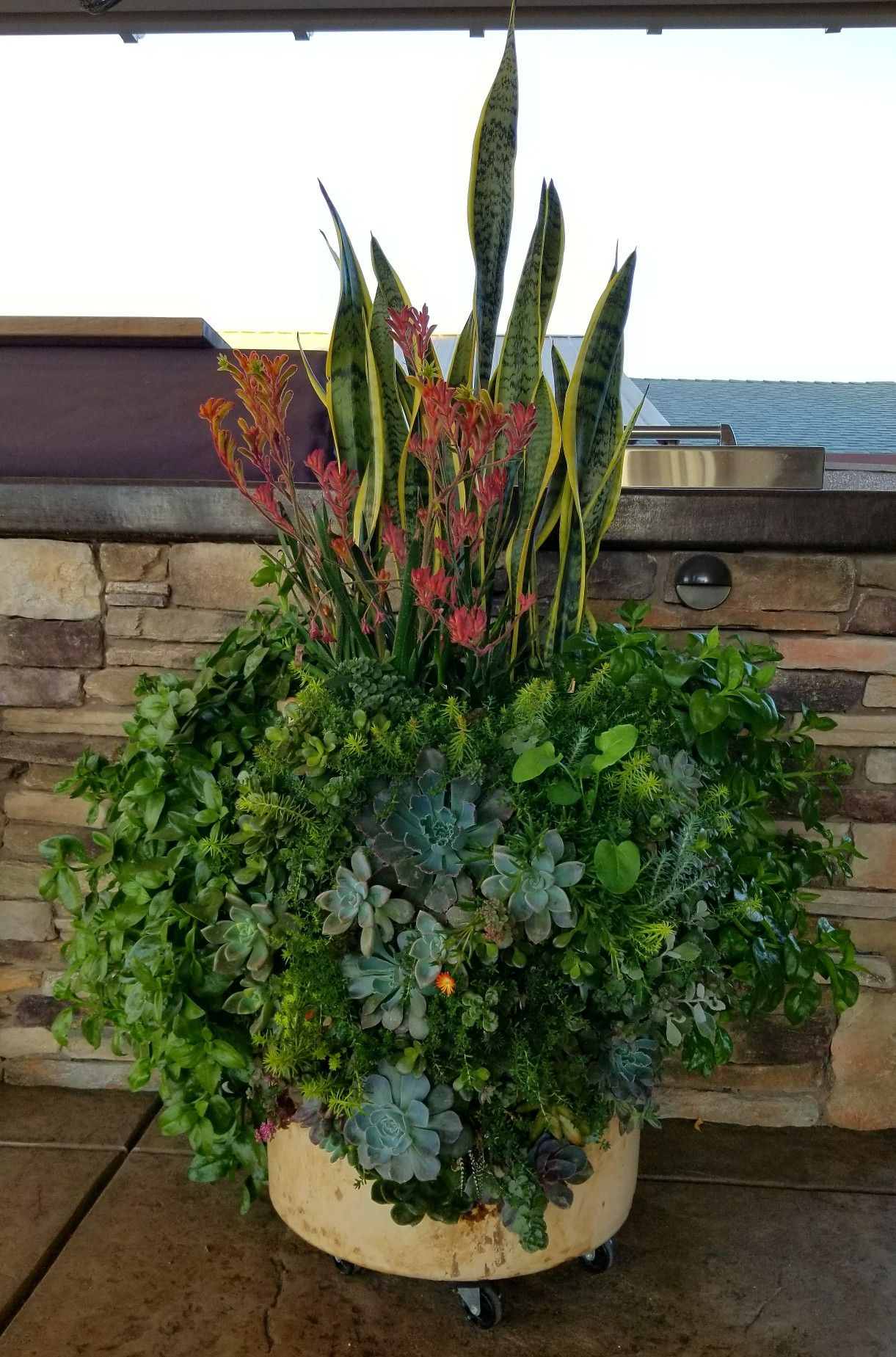 Succulent Planter With Many Different Types Of Plants And Succulents.