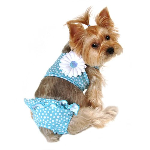 Simplydog Scatter Dot Pull On Swimsuit For Dogs Blue Multiple