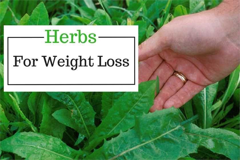 Weight loss per week gastric bypass