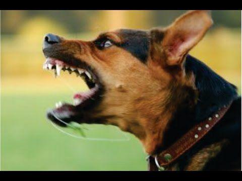 Dog Sounds Angry Dog Bark And Growl Youtube Angry Dog Dog Sounds Dogs