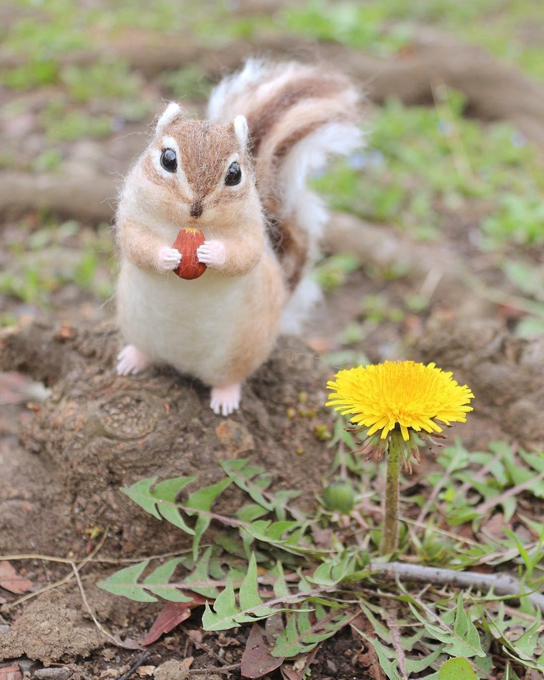珍しいキノコだわ もぐもぐ シマリスさん それキノコじゃないですよ 散歩の途中で見つけたすごく背が低いタンポポ 地上から5センチくらいの所で 立派に 鮮やかに まっすぐ空へ向かって咲いていました リスの連投失礼いたしました シマリ