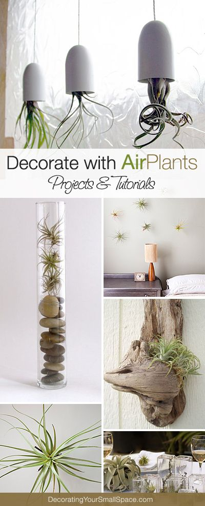 Izzy! These look pretty neat!  Creative Ways to Decorate with Air Plants! • Lots of Projects & Tutorials!