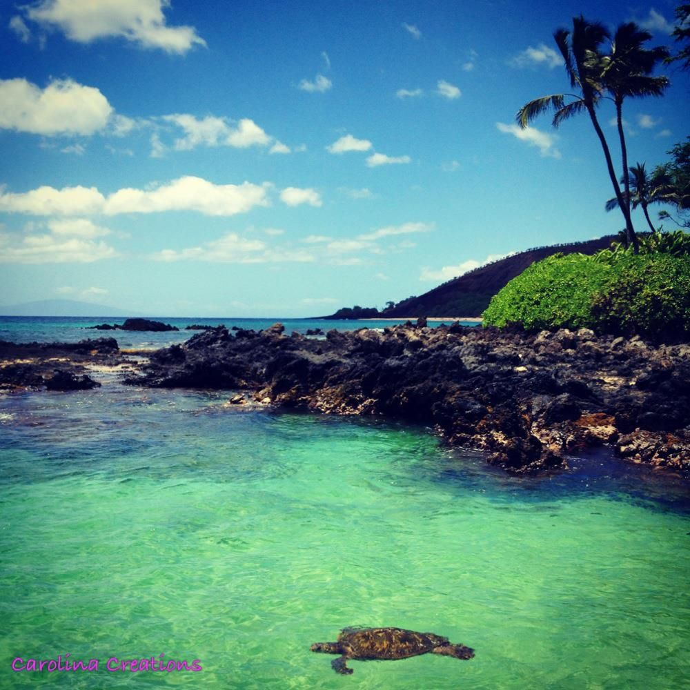 Maui Hawaii Beaches: We Love This Photo Of A Honu Swimming At Makena Beach