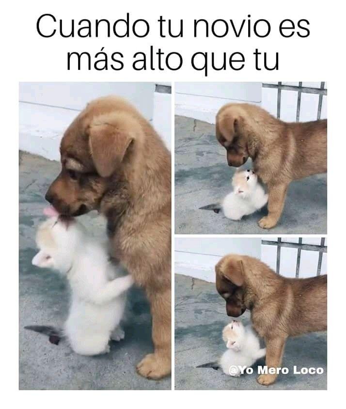 Pin De Maria Masco En Posteos Memes De Animales Divertidos Humor Divertido Sobre Animales Memes De Perros Chistosos