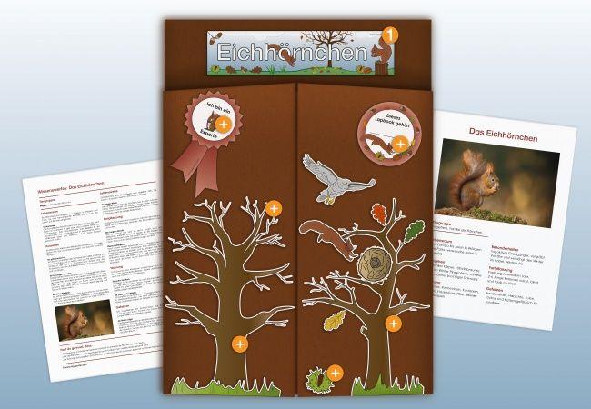 De Eichhoernchen Lapbook Aussen Kigaportal Kindergarten Grundschule Herbst Tiere Schulprojekte Eichhornchen Kreative Ideen Fur Kinder