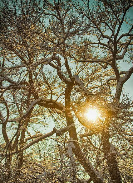 #Trees #Winter #Art #insognaGallery www.BoInsogna.com on Google+
