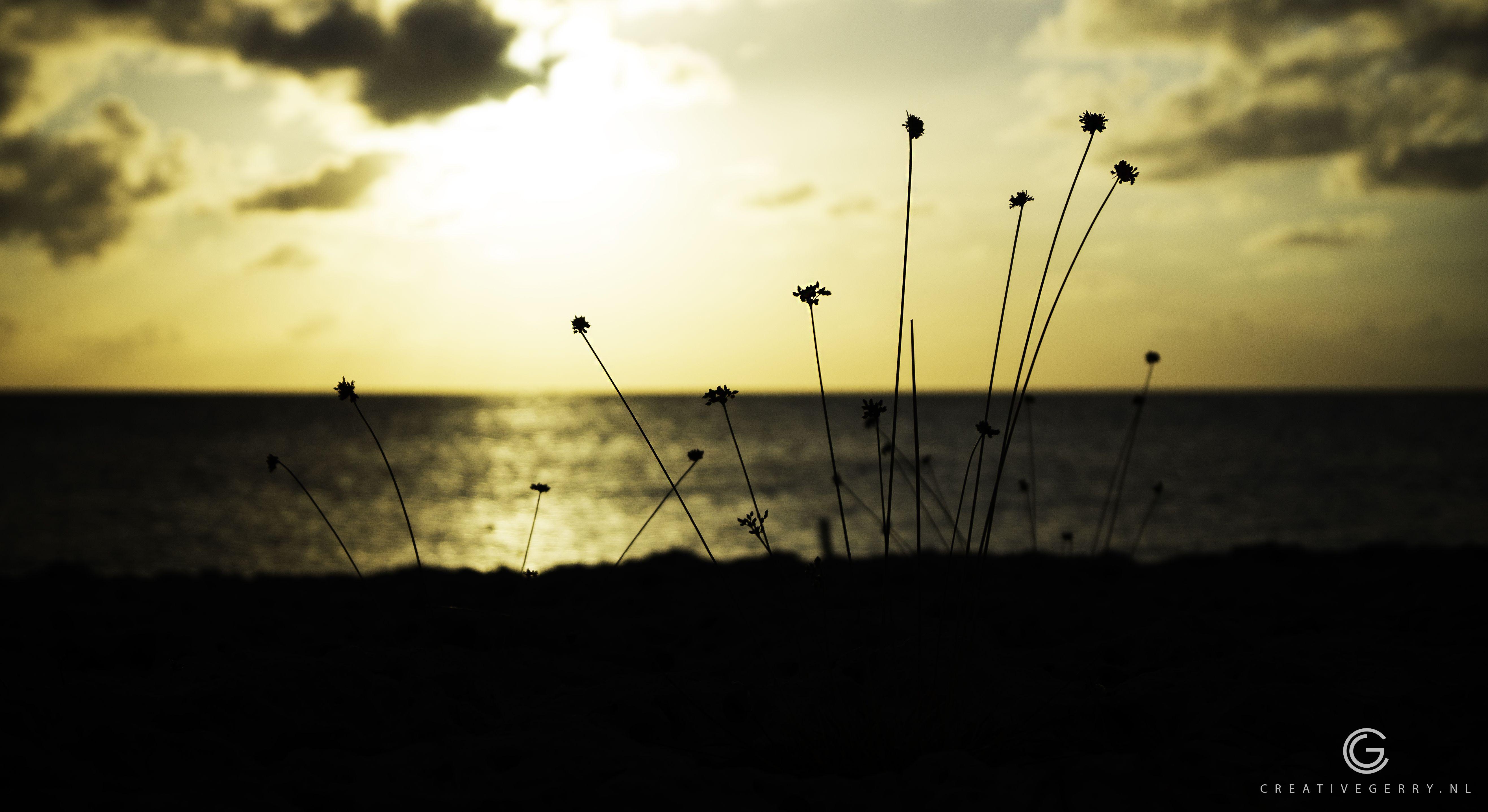 Orange Sunset - Zonondergang