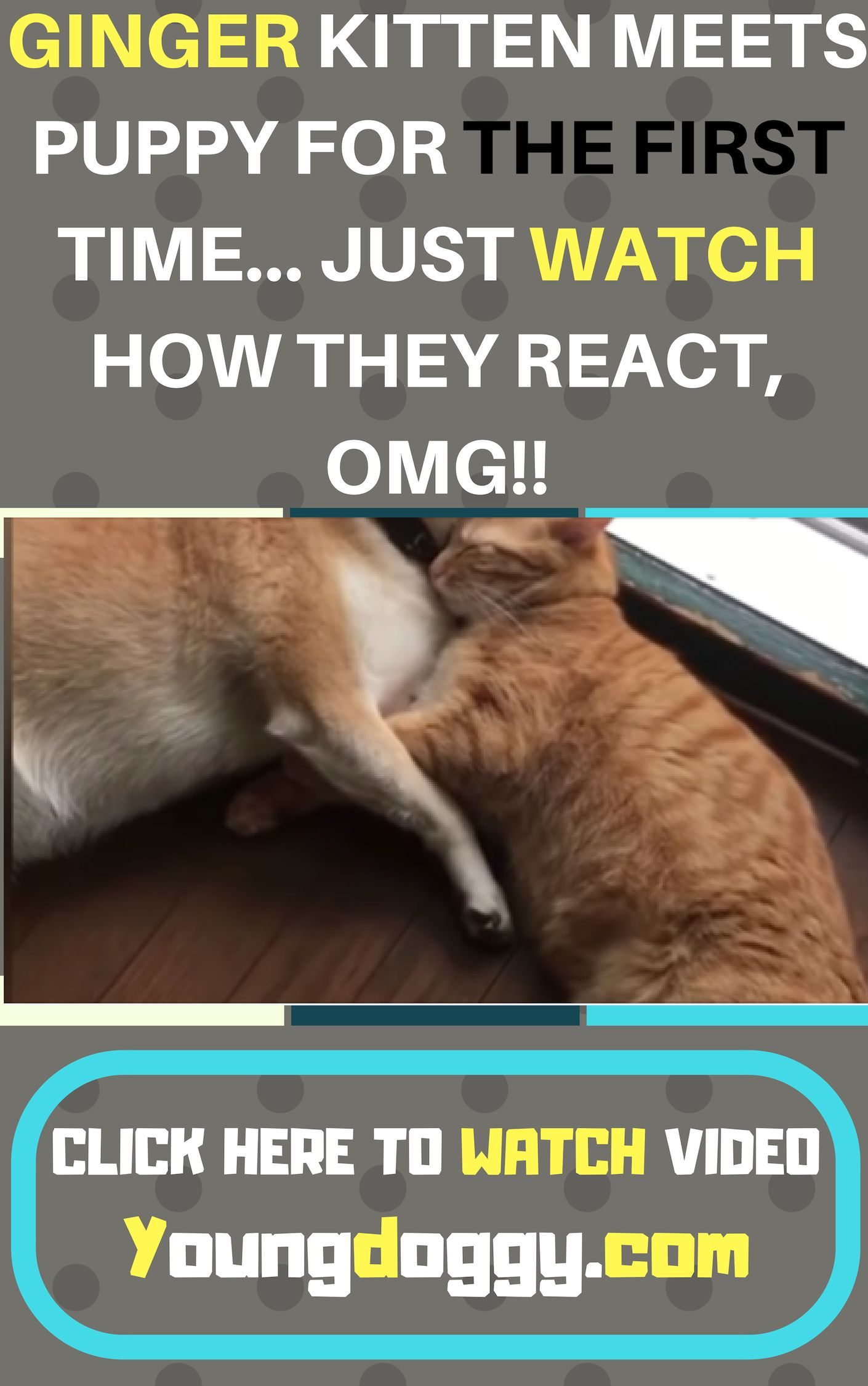 Pin On Cat Rescue Stories