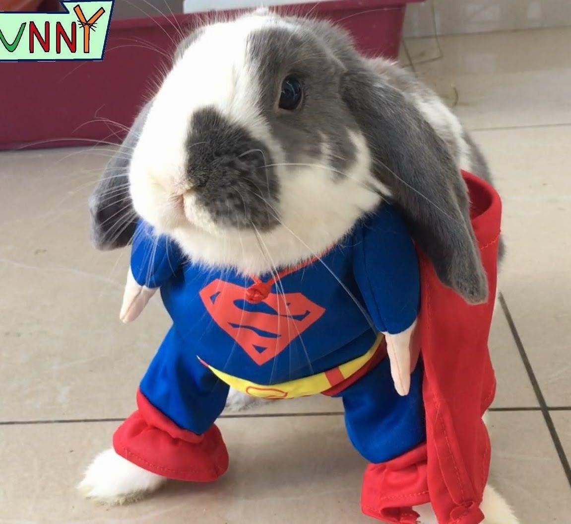 Ordinary Rabbit Think Again Youtube Rabbit Bunny Bunny