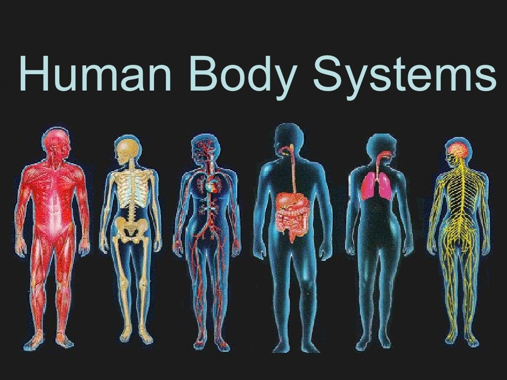 Human body systems by rlinde via slideshare | Anatomy | Pinterest