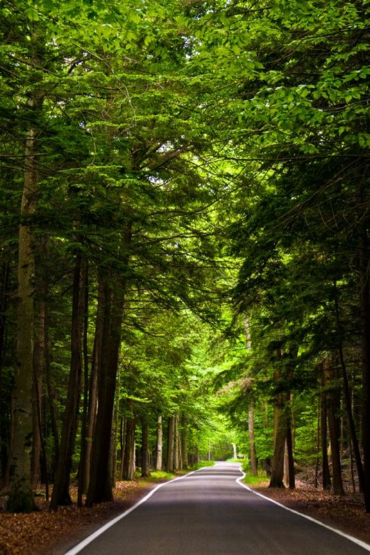 almost a tree tunnel