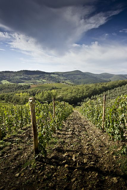 Tuscan Vineyard - Castellina in Chianti, Italy  http://www.nytimes.com/2013/11/17/travel/36-hours-in-chianti-italy.html