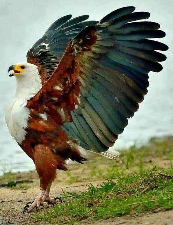 Pin By Myra Liston On Birds Of A Feather Beautiful Birds Birds
