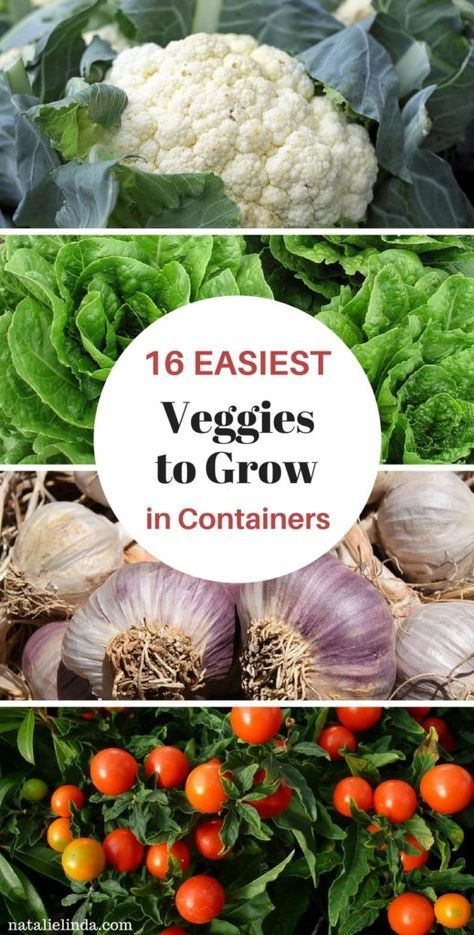 16 Vegetables That Grow In Containers is part of Vegetable garden for beginners, Container gardening vegetables, Vegetable garden planner, Container vegetables, Home vegetable garden, Growing vegetables in containers - Growing vegetables in containers is easy! Here's a list of 16 vegetables that grow in containers  Grow them in your yard, balcony, or near your windowsill!