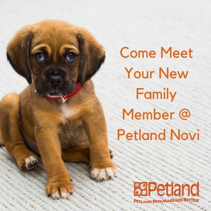 petlandnovi posted to Instagram: Stop in for a quick cuddle