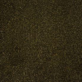 Stainmaster Purebred Petprotect Handler Plush Carpet Sample S621178handler-Dler