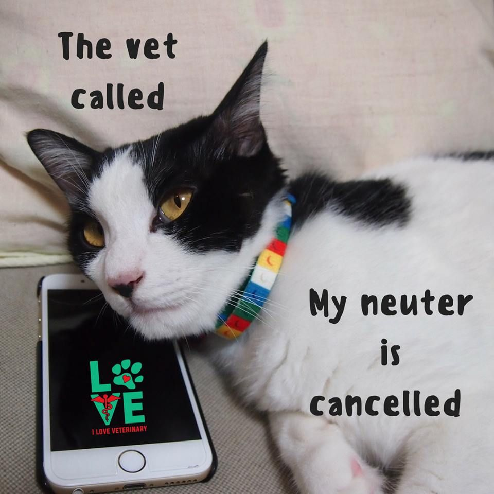Spay Neuter Your Pets Cats Cat Care Pets