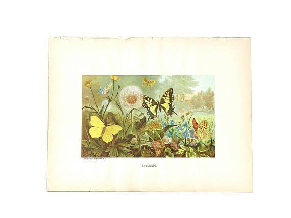 Antique Book Print Illustration Book Plate Chromolithograph ...