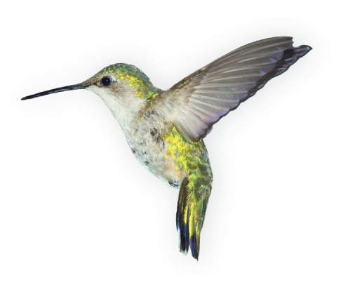 Http Www Caribbeantravel Com Includes Images Bird Png Png Immagini