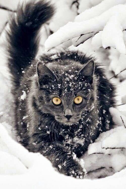 Dieser Blick Seltsame katzen, Hübsche katzen, Schönen katzen