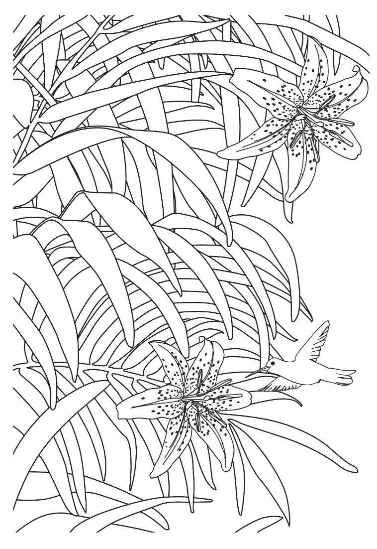 Jardins extraordinaires: 100 Coloriages anti-stress: Amazon.de ...
