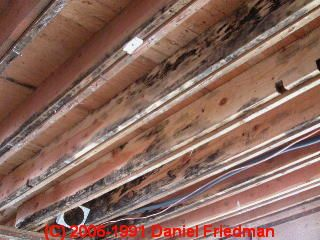 How To Identify Harmless Black Mold On Indoor Surfaces