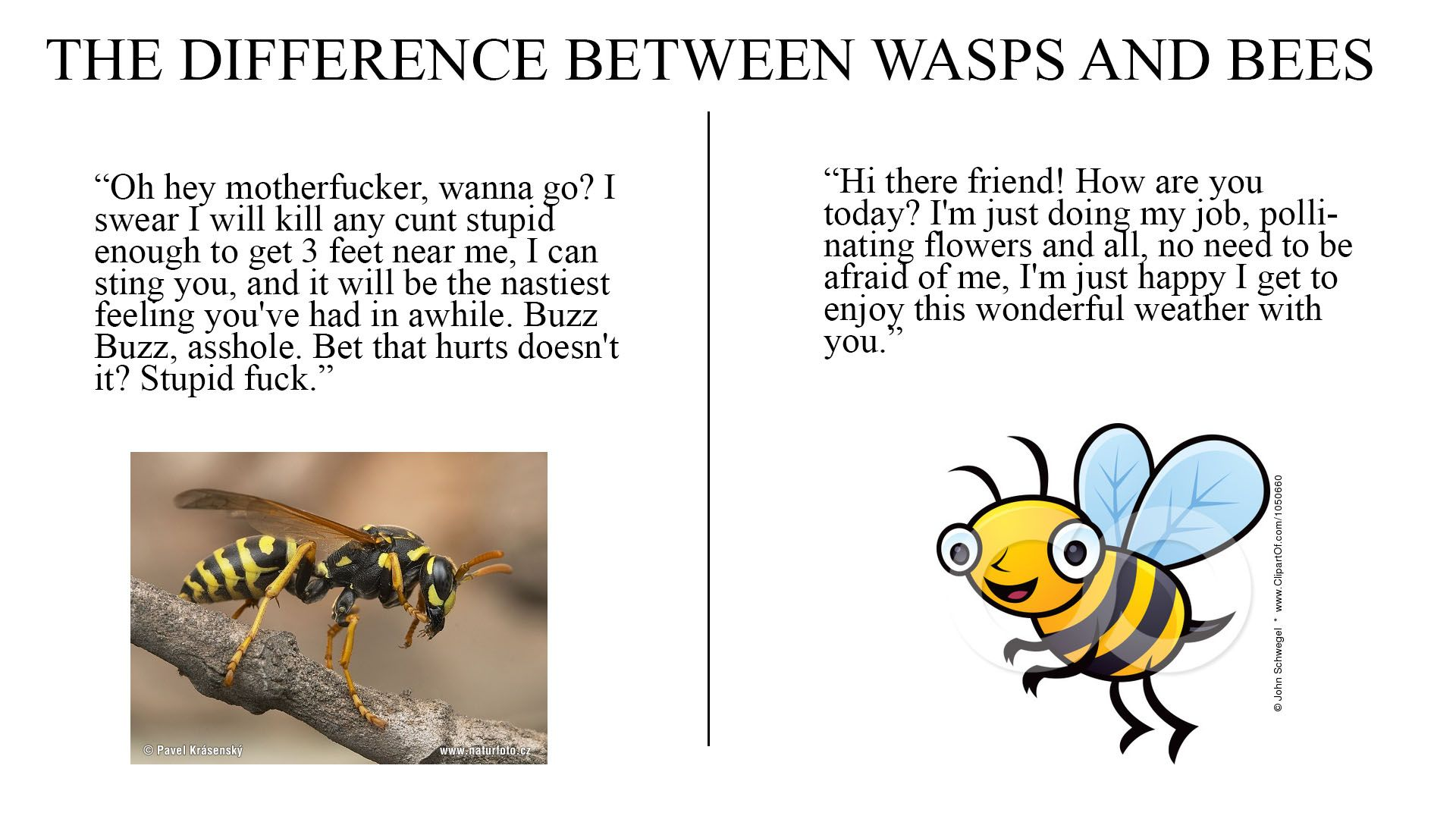 I Hate Wasps They Always Get Me, And It Pisses