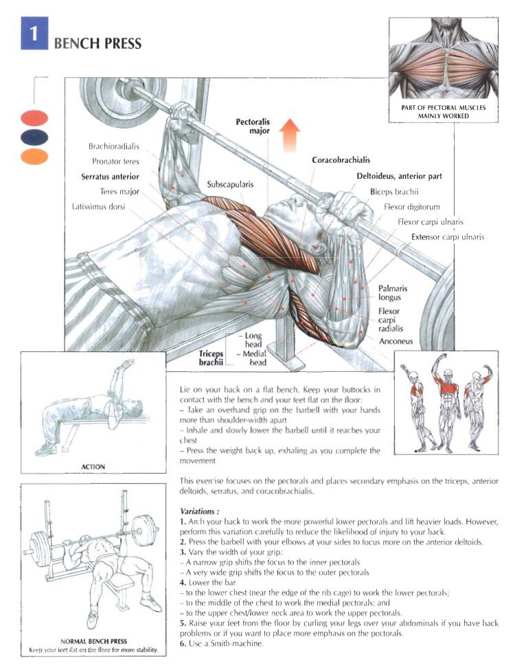 Taken from Strength Training Anatomy by Frederic Delaviethought