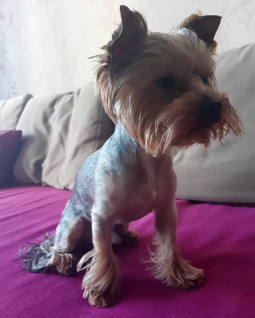 .... #dog #dogsofinstagram #dogs #puppy #dogstagram #instadog #pet #doglover #love #dogoftheday #cute #doglovers #instagram #pets #of #puppylove #doggo #puppies #cat #doglife #puppiesofinstagram #ilovemydog #dogsofinsta #animals #hund #doggy #petstagram #k #animal
