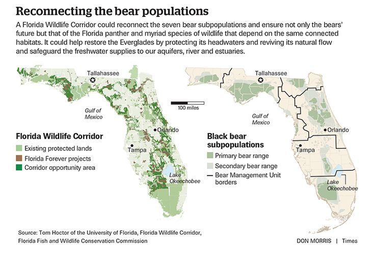 Black Bears Show Us How to Save Wild Florida
