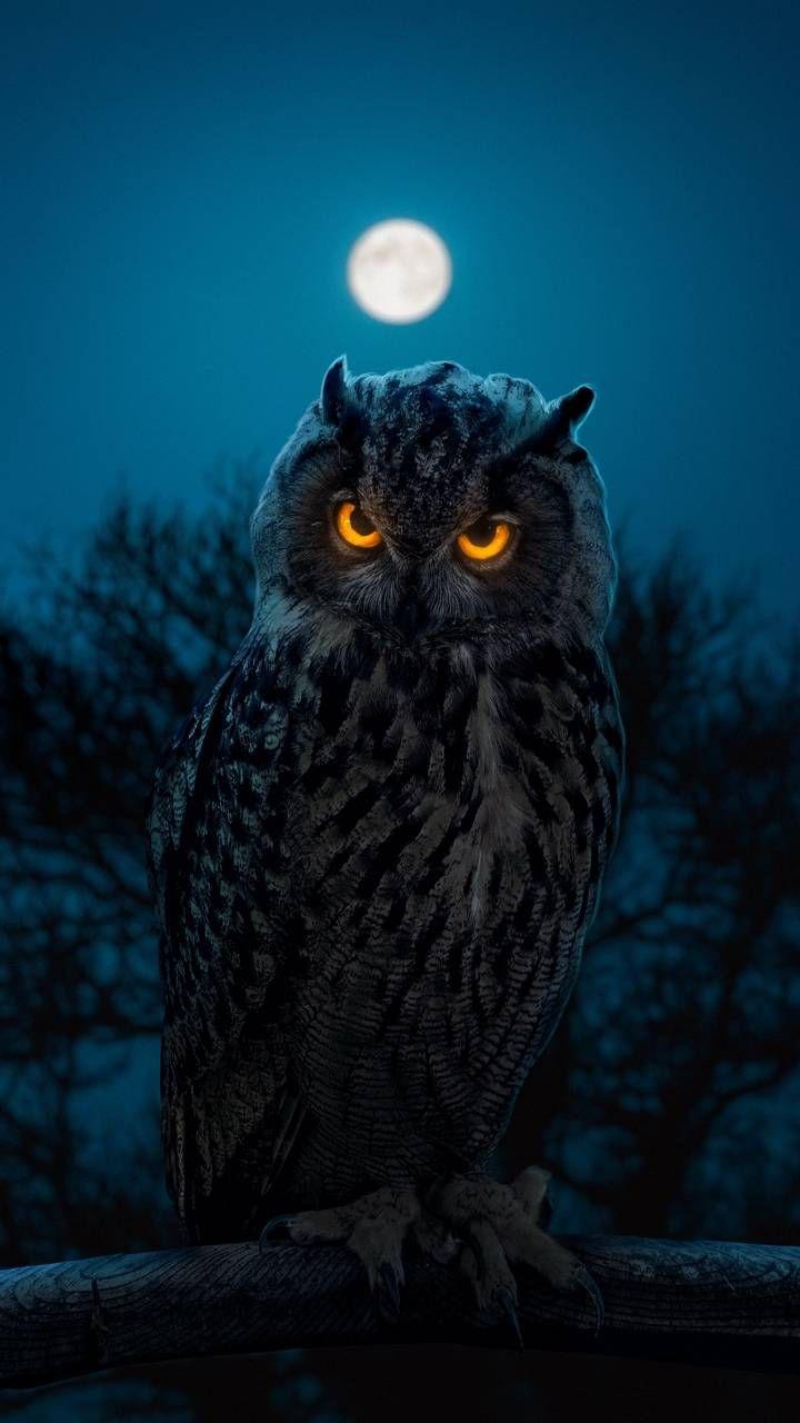 Glowing Eyes Owl - iPhone Wallpapers