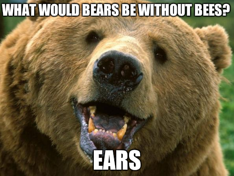 Everything Is Bears Bear Grizzly Bear Brown Bear