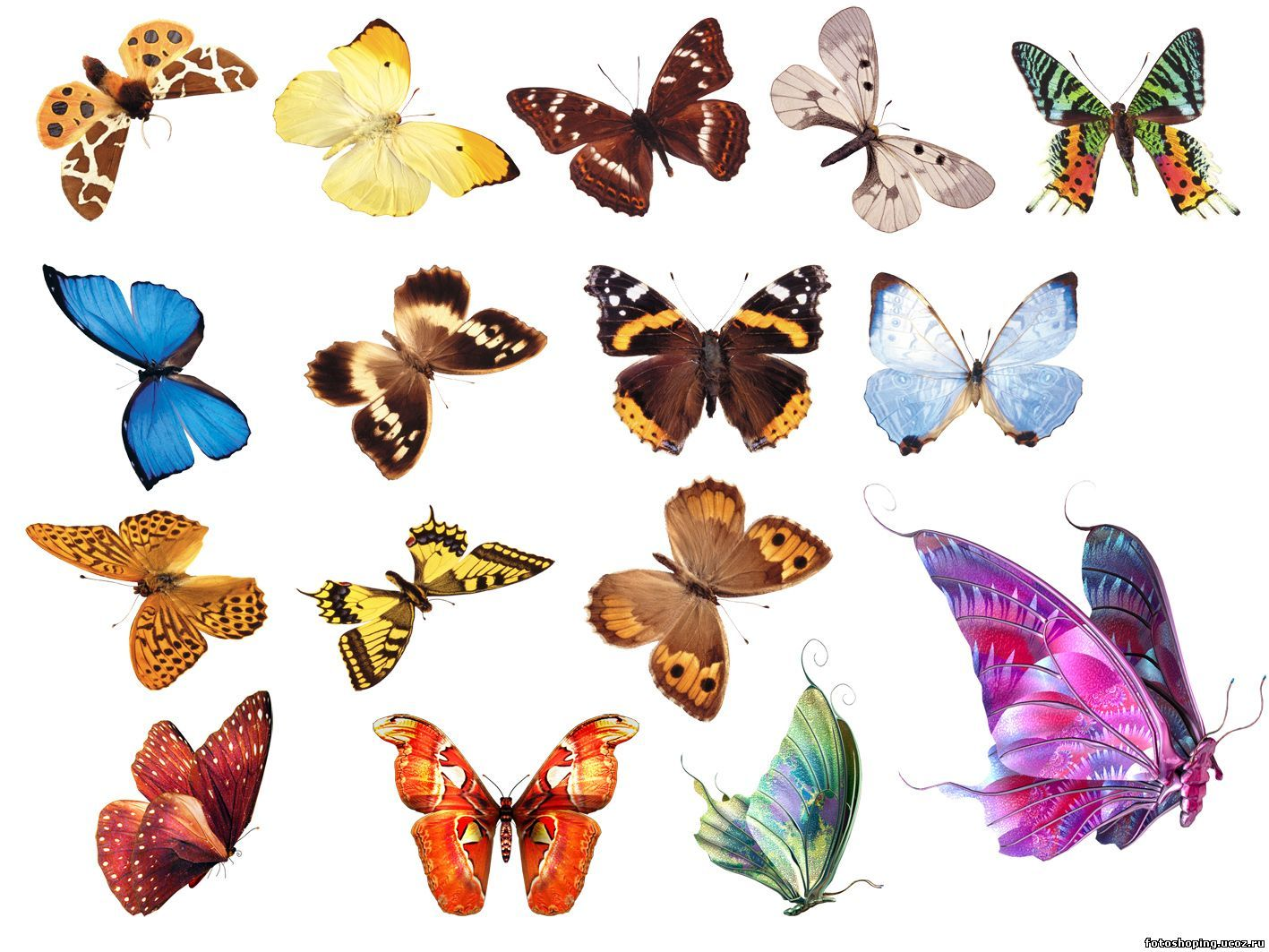 Картинки много бабочек для детей