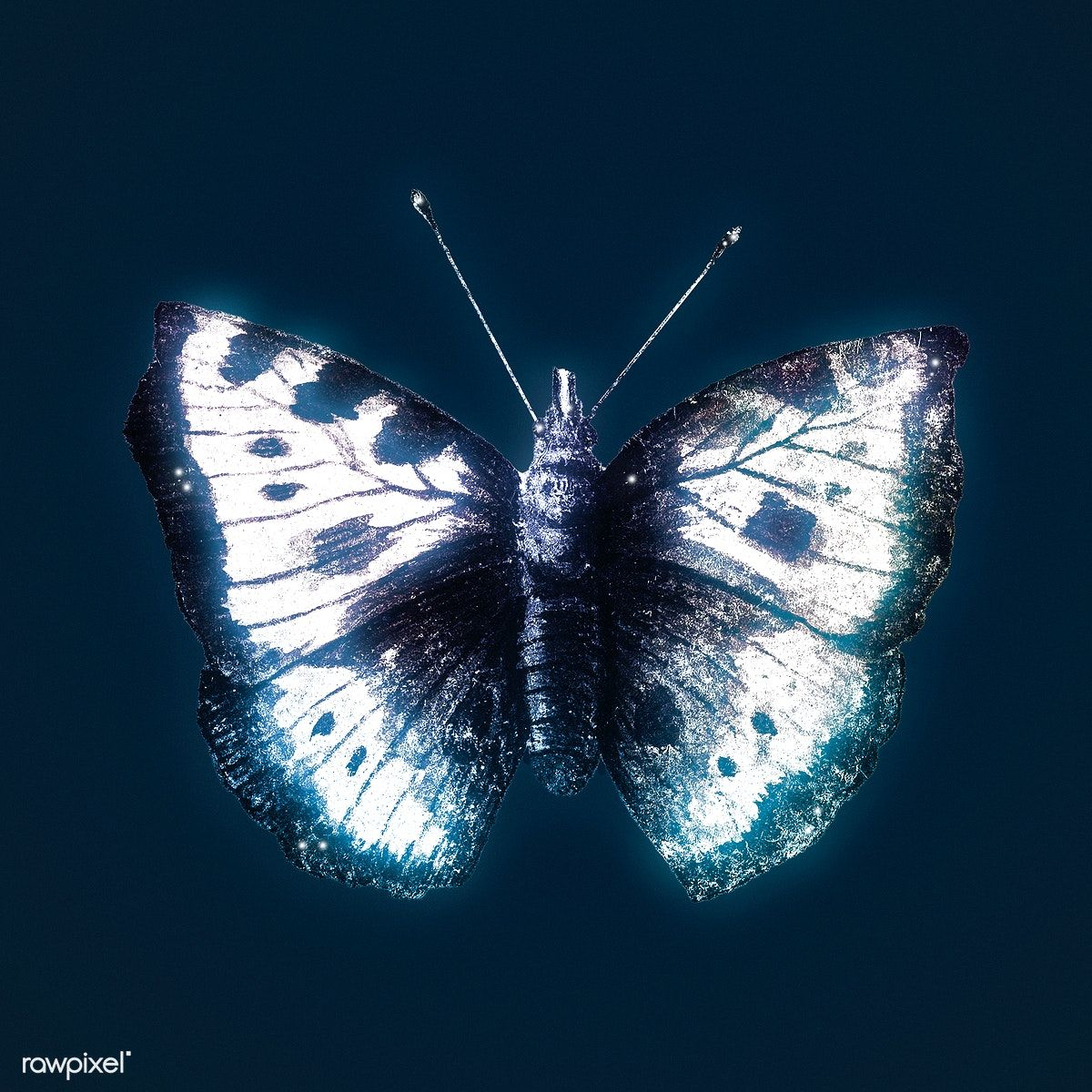 Download Premium Illustration Of Butterfly Outer Glow
