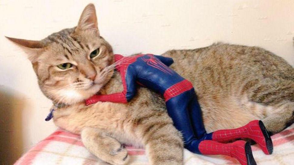 It's National Hug Your Cat Day Nerdist Hug your cat