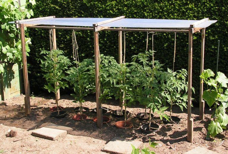 7) Afdak voor paprika's of tomaten