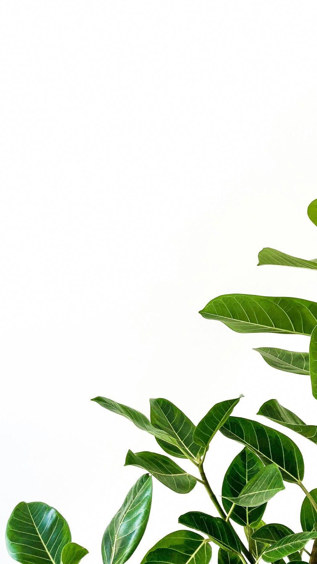 Minimalist Iphone Wallpaper Leaves