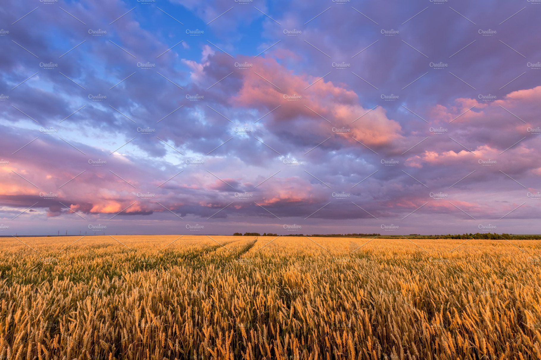 Twilight On A Wheat Field Sky Landscape Nature Photos Wheat Fields