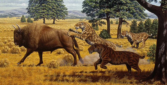 sabre tooth cat Google Search in 2020 Prehistoric