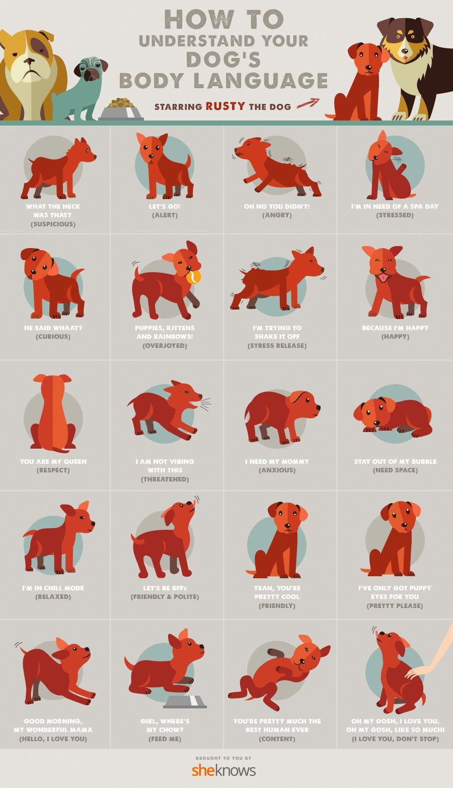 All of your dogus body language finally explained infographic