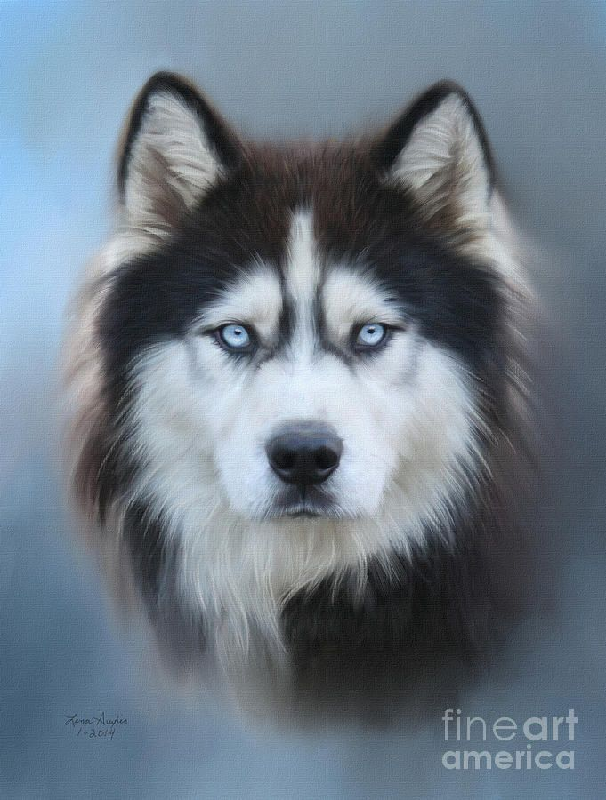 Siberian Husky Dog Paintings Husky Drawing Dog Art